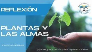 plantas-almas-biblia-reflexion