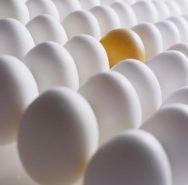 huevos-virginidad1