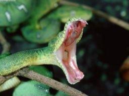 mordedura_serpiente_devocional