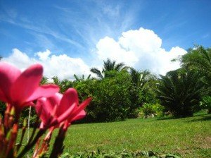 Reflexiones-un-jardin-para-Dios