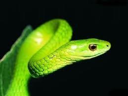 pablo y la serpiente