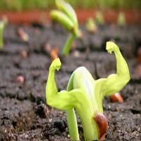 crecer-liderazgo