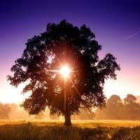 arbol-sunset-luz-Dios