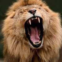 leon-biblia-justo