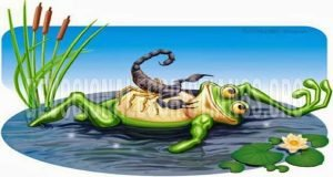 rana-escorpion-historias