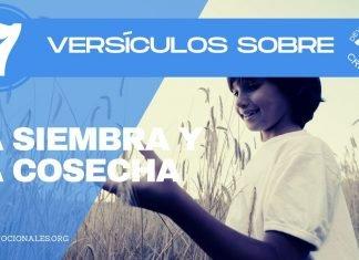 versos-biblia-sembrar-cosechar