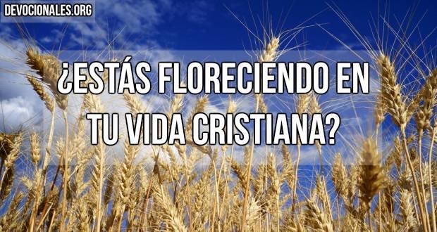 floreciendo-vida-cristiana