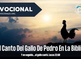 El-canto-del-gallo-Pedro-Biblia-lucas-22-60-versiculos-biblicos